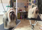 Elegance-Canine---Pont-l-Abbe---Pays-Bigouden---4