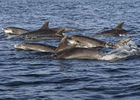 Croisières - Archipel excursions - Grands dauphins - Pays Bigouden - 3