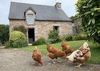 Grange--exterieur-avec-poules-comp