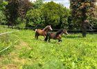 Kurun equitation - PSG - 2