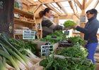Photo-cote-legumes