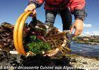 Sortie et atelier cuisine aux algues - Escapade Glas