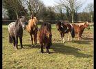 centre equestre- mon poney emoi - Plogastel saint germain