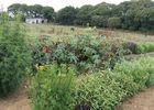 les jardins de Trelen 6 - Ploneour - Lanvern