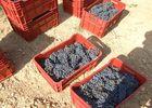 DEGLAR034FS001BI_domaine de la grange_Vigne