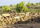 Domaine de cébène muret de pierres seches