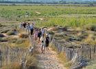 Les Orpellières-les ganivelles aident a reconstituer les dunes- JP Degas