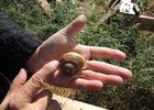 Sud'helix (escargots) 4