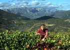 Vigneron de Berlou©G.Souche PHLV