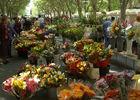 marche aux fleurs Béziers