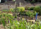 jardin-medieval2
