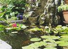le-lotus-bleu-exterieur-2-julie-nguyen