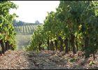 Les Faïsses vignes