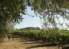 Vignes Bachellery