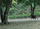 Cebenna- sortie mouflon
