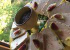 Foie gras basse température à l'Armagnac et son confit d'oignon doux des Cévenne