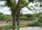 Le vignoble face au gîte