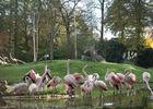 Flamants roses Zoo de la Bourbansais à Pleugeneuc