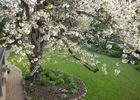 Le-Berceul-Duault-La-Richardais-Cerisier