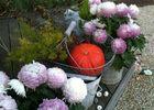 Le-Vieux-Logis---Vautier-Ginette-Saint-Briac-fleurs-potiron