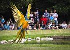Spectacle d'oiseaux