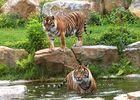 Loisirs-Zoo de Champrepus-Champrepus