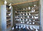 la-ferme-aux-pigeons-exploitation