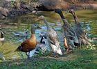 Naujac-sur-Mer - Animalia Parc
