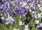 Parc Floral 33