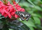 Serre aux papillons_3©Parc Floral de La Source, Orléans-Loiret