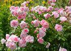 Gîte Durocher-St Denis les Martel-fleurs