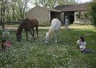 Ferme équestre du cheval blanc - Lacapelle Cabanac