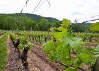 03le Chai - Vignes © Lot Tourisme - C. Sanchez