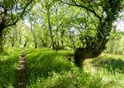 02Caniac-du-Causse - Descente dans le sous bois© Lot Tourisme - C. Sanchez