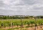 02Les rédoux - Vignes© Lot Tourisme - C. Sanchez