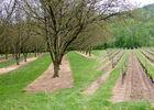 02la Pistoule - Entre Noyeraies & Vignes© Lot Tourisme - C. Sanchez