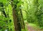 04Velles - Chemin terreux en sous bois © Lot Tourisme - C. Sanchez