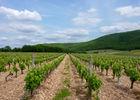 06Le Caillau - Vignes du Cahors© Lot Tourisme - C. Sanchez