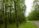 Camp del Bos - bois de chênes_10 © Lot Tourisme - C. Sanchez