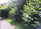 ChHotesLAVERGNE-Argentat_jardin