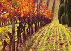 Chambert-automne