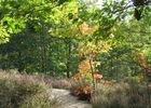 Lavercantière - Chemin au Milieu de la Bruyère