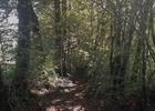 Chemin en sous-bois - circuit le chemin aux deux visages_11 © Lot Tourisme - A. Leconte