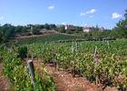 Glanes - Vignoble des Côteaux de Glanes