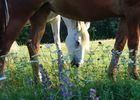 Espace Champetre - St Sylvain-chevaux