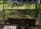 Foire du Dégagnazès - Le tiercé des p'tits cochons