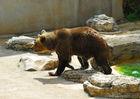 LOI3153CDT460001-Parc-Animalier-3-Gramat