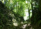 Latouille-Lentillac - Passage entre mousse, lierre et fougère_05 © Lot Tourisme - C. Sanchez