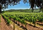 Les vignes du Clos Triguedina_07 © Lot Tourisme - C. ORY