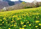 PRENDEIGNES-prairie fleurie